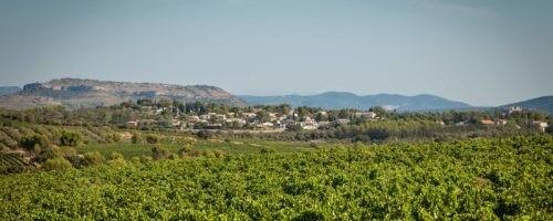 Oenotourisme Montpellier - Domaine de l'Arbousier - Tourisme de nature Hérault - Région Occitanie vignoble